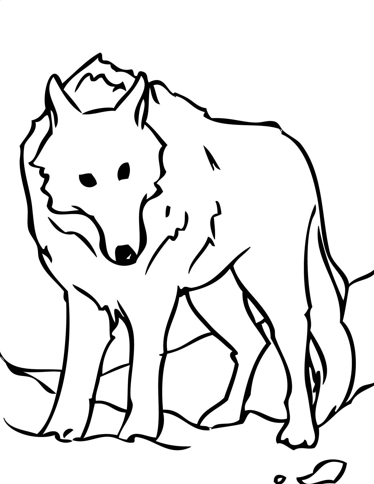 1275x1650 Arctic Wolf Clipart Cute