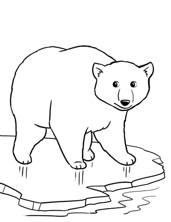 600x777 Polar Animal Coloring Pages For Drawn Polar Bear Color 4 Animal