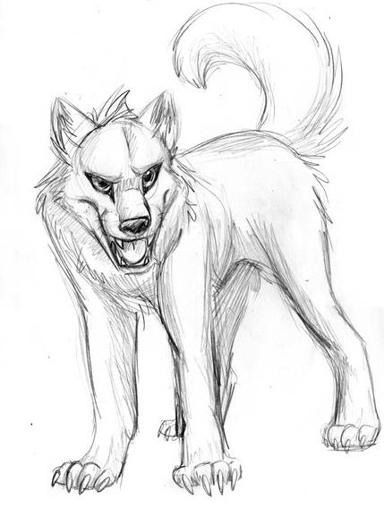 429x567 Wolf Sketch By Invadertigerstar