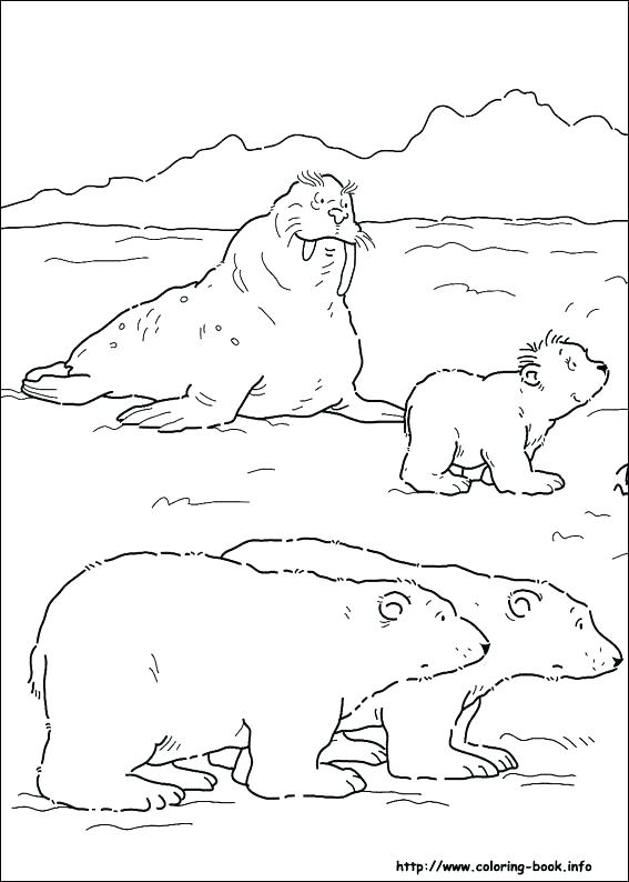 567x794 Arctic Animal Coloring Pages Arctic Coloring Pages Arctic Tundra