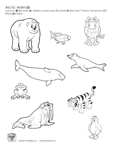 387x494 Arctic Coloring Pages Perfect Coloring Arctic Animals Coloring