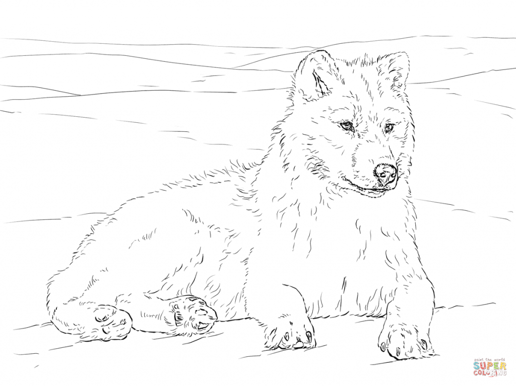 1024x767 How To Draw A Arctic Wolf Animal Jam Drawing An Arctic Wolf
