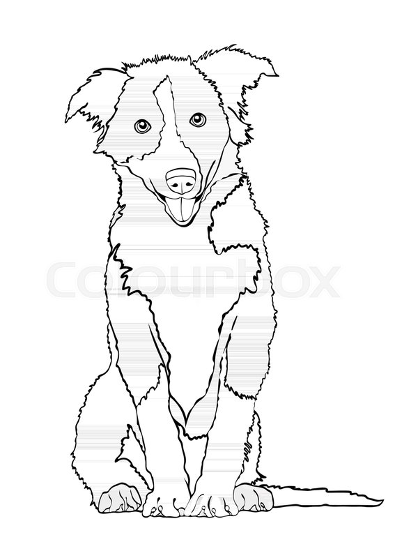 567x800 Dog Vector Outline Drawing, Sketch, Coloring Book. Black And White