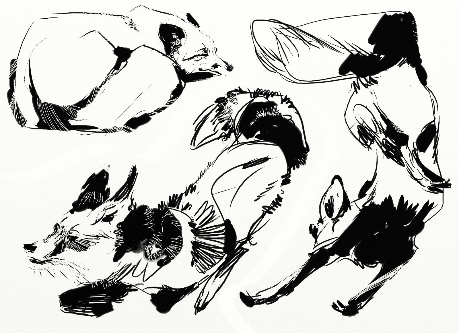 Line Drawing Penguin : Animal pattern drawing at getdrawings.com free for personal use