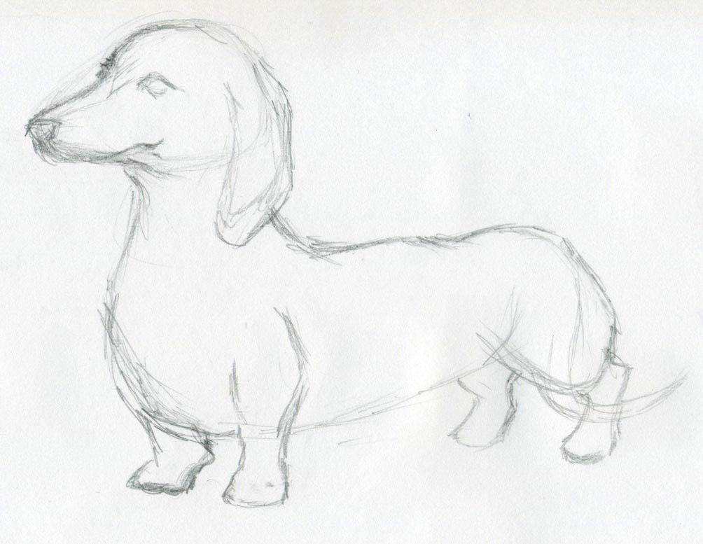 1004x777 Dog Sketches For Inspiration