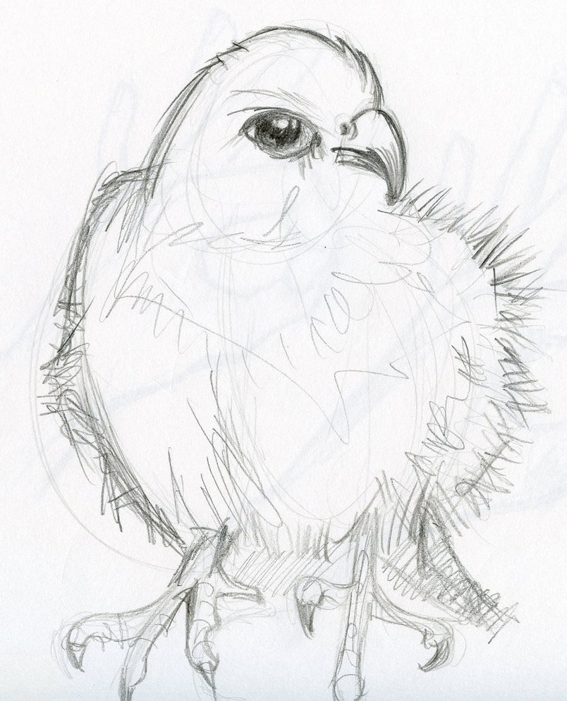 804x994 Pencil Sketch Animals By Phebron