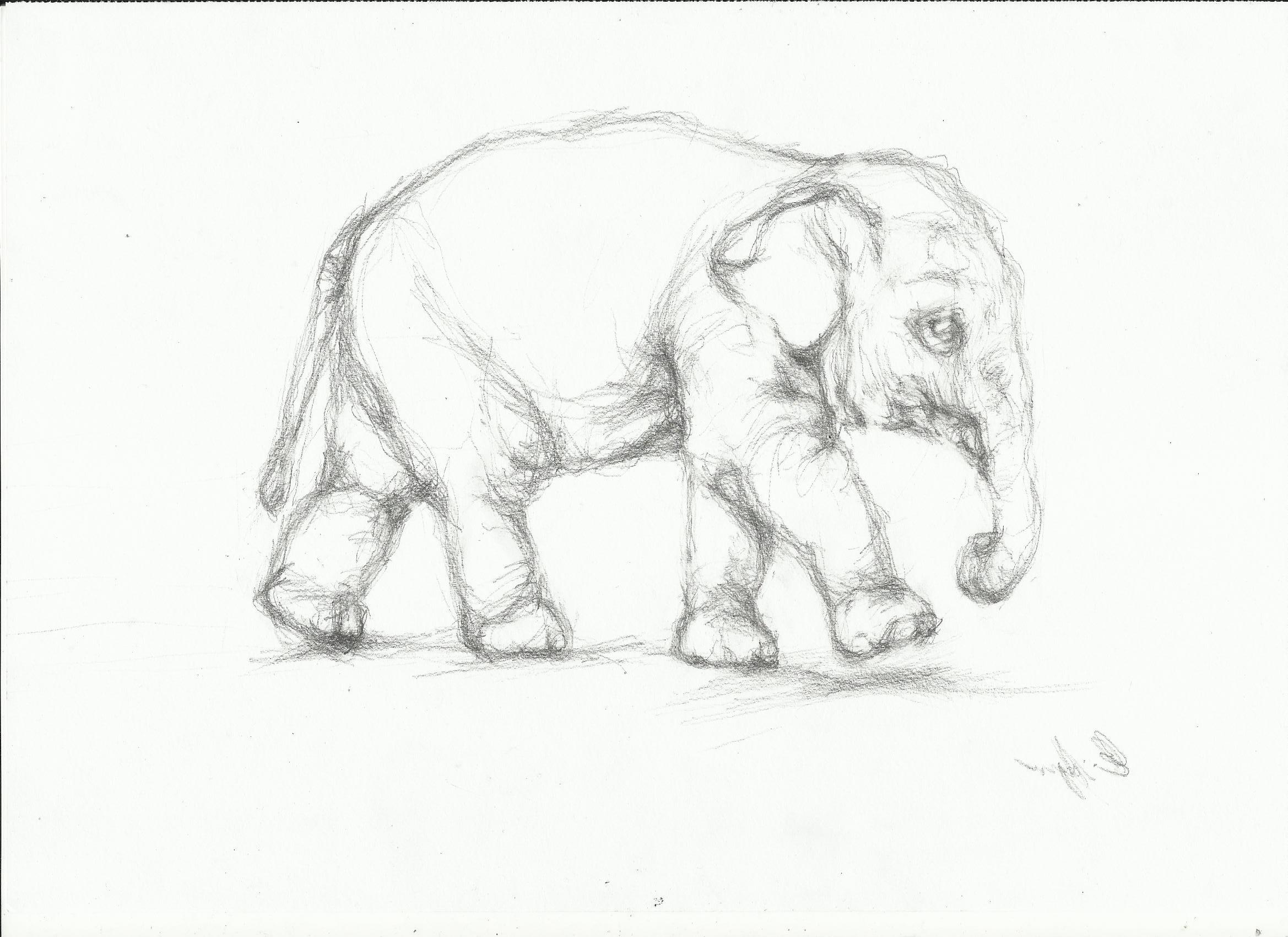 2338x1700 Photos Animals Pencil Sketch,