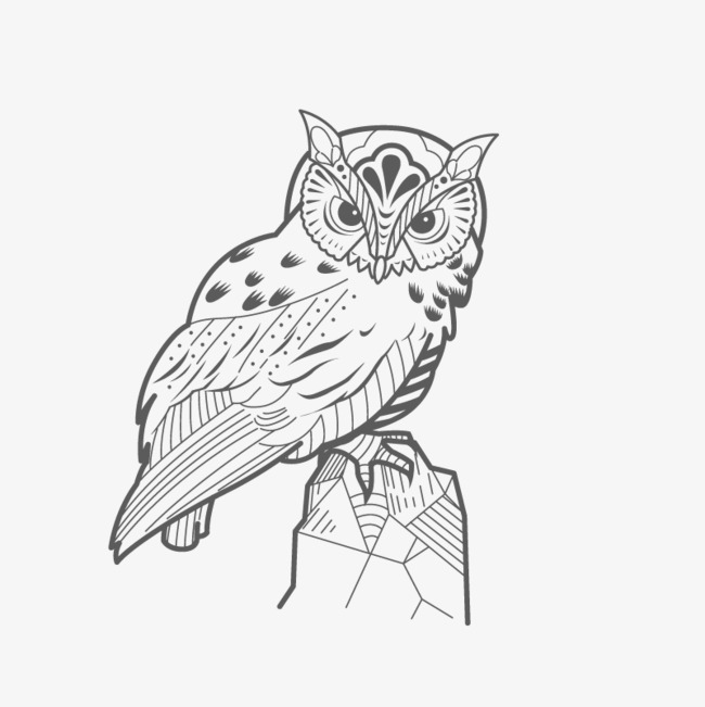 650x651 Vector Owl, Pencil Drawing, Black, Animal Png And Vector For Free