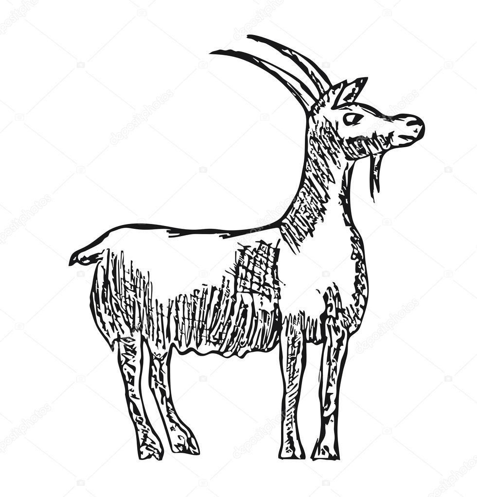 981x1023 Vector Goat Farm Animal With Cartoon Illustration Of A Pencil