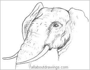302x236 Wildlife Pencil Drawings