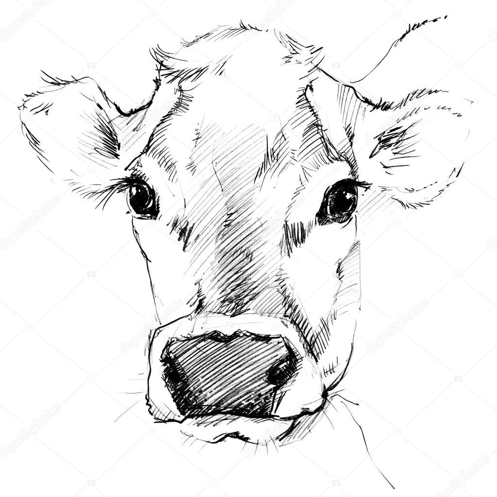 1024x1024 Cow. Cow Sketch. Dairy Cow Pencil Sketch. Animal Farm Stock