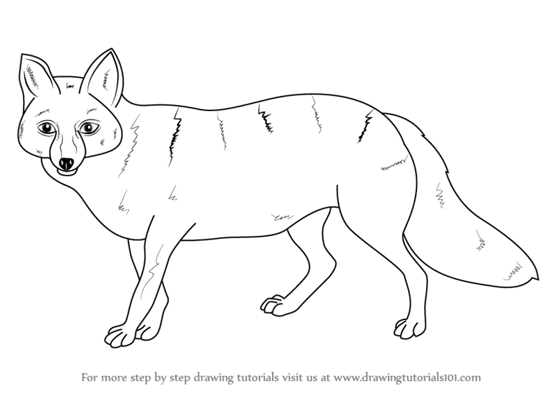 800x566 Learn How To Draw A Pampas Fox (Wild Animals) Step By Step