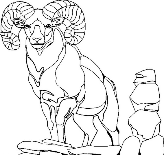 567x535 Mountain Goat Coloring Page Amp Coloring Book