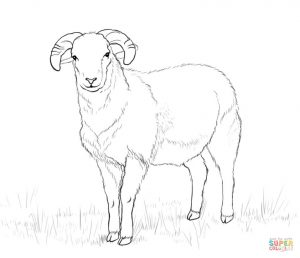 300x258 Ram Outline Coloring Page Print Download