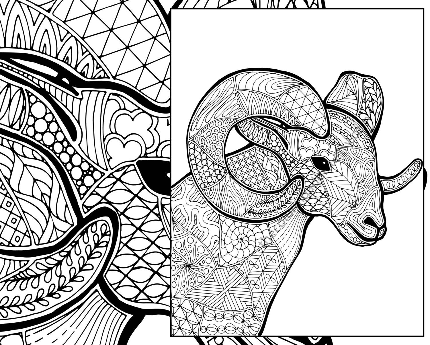 1500x1203 Ram Sheep Coloring Sheet Animal Coloring Pdf Zentangle