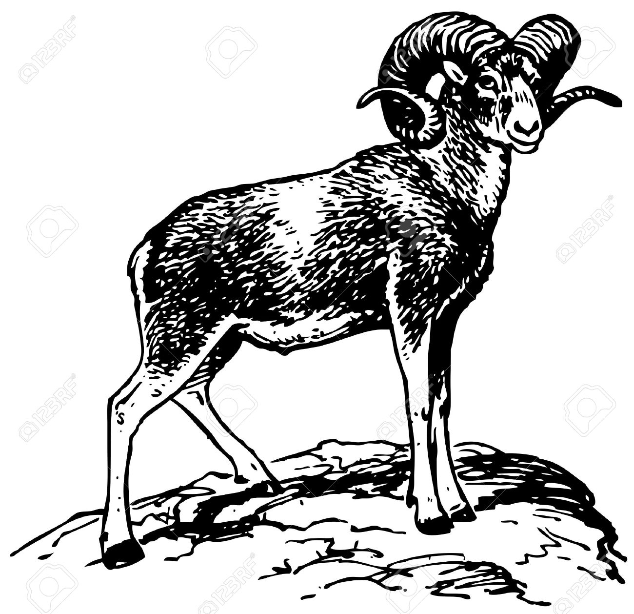 1300x1258 Argali Mountain Sheep Royalty Free Cliparts, Vectors, And Stock