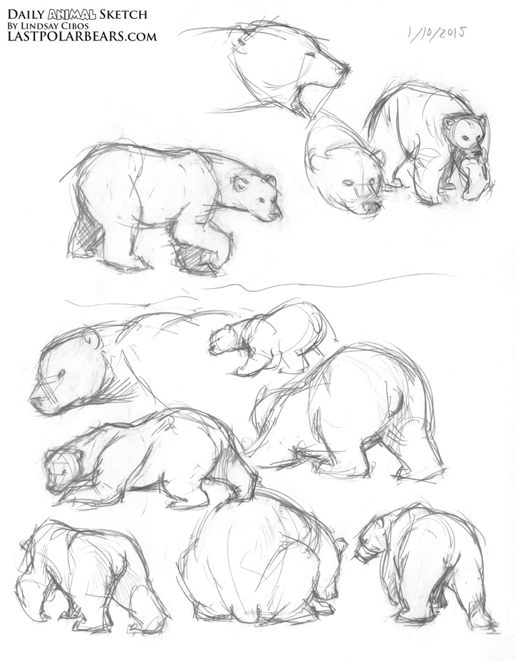 Animal Sketch Drawing at GetDrawings.com   Free for personal use ...