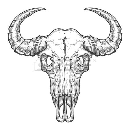 450x450 Buffalo Skull Vector Sketch. Vintage Hand Drawn Animals Head