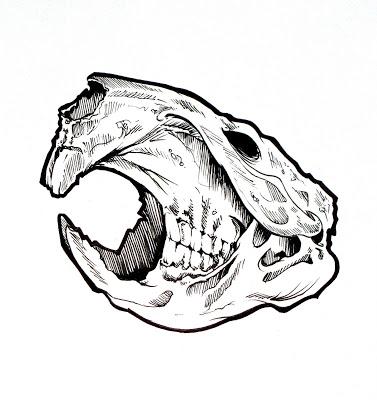 377x400 Drawn Beaver Skull