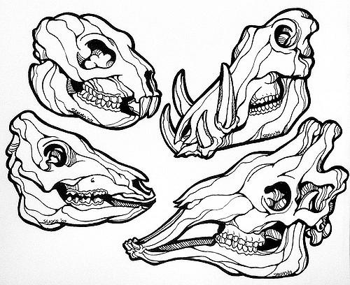500x408 Animal Skull Line Drawing