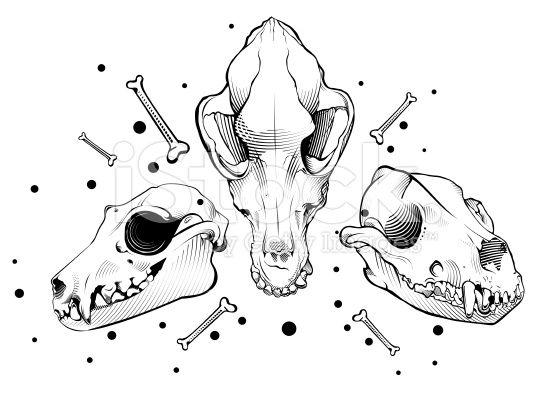 556x397 The Best Dog Skull Ideas On Dog Anatomy, Anatomy