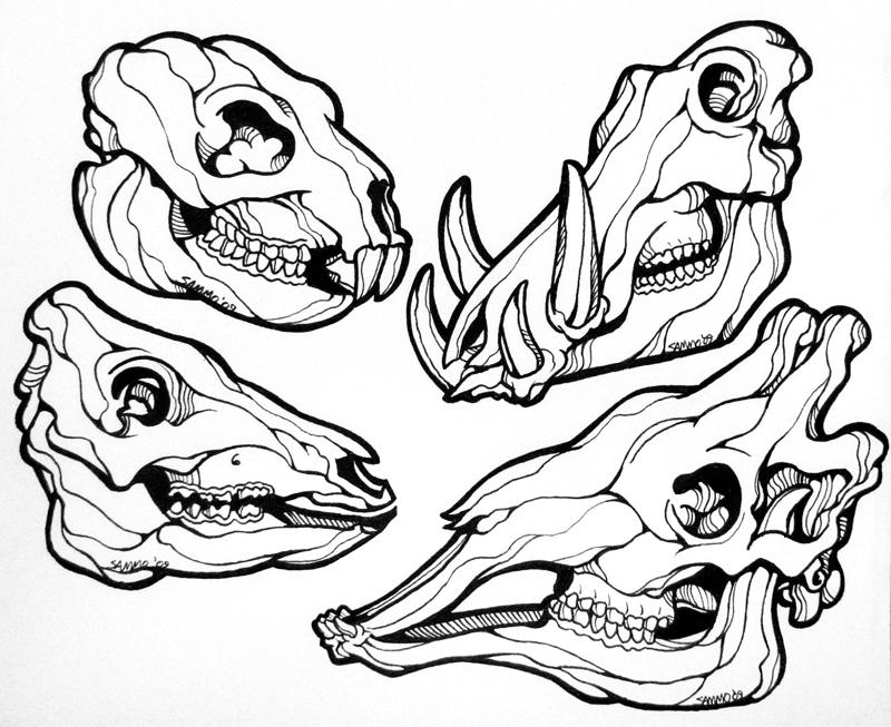 800x653 Animal Skulls Line Art By Sammo371