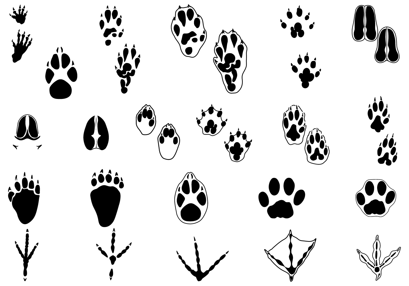 Animal Tracks Drawing