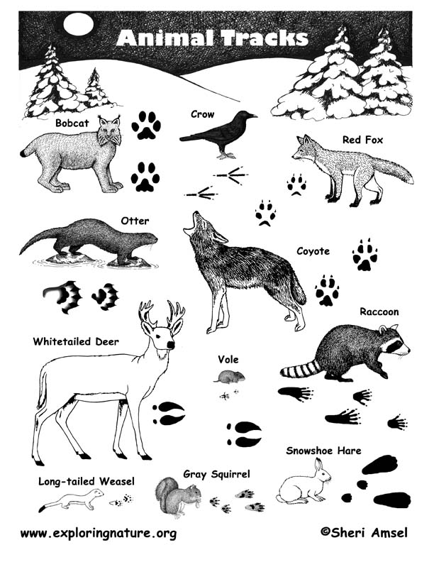 Set Of Animal Tracks Vector Illustration