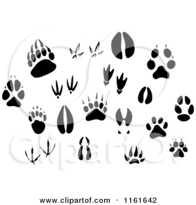 690x720 Animal Tracks Animal Tracks Tattoo Tattoo