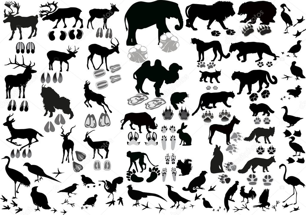 1024x721 Black Birds And Animals With Tracks Stock Vector Dr.pas