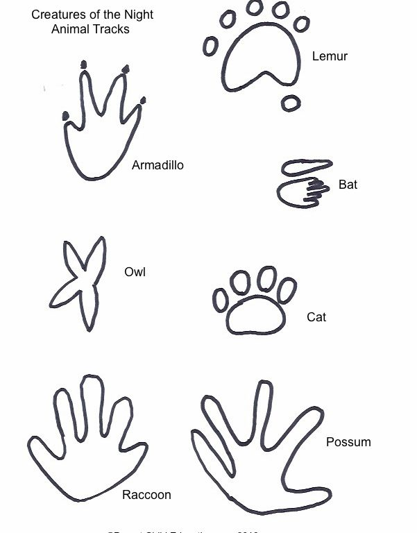 Animal Tracks Drawing At Getdrawings Com Free For