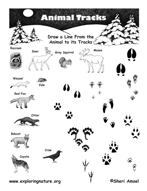612x792 Variety Of Resources For Exploring Nature