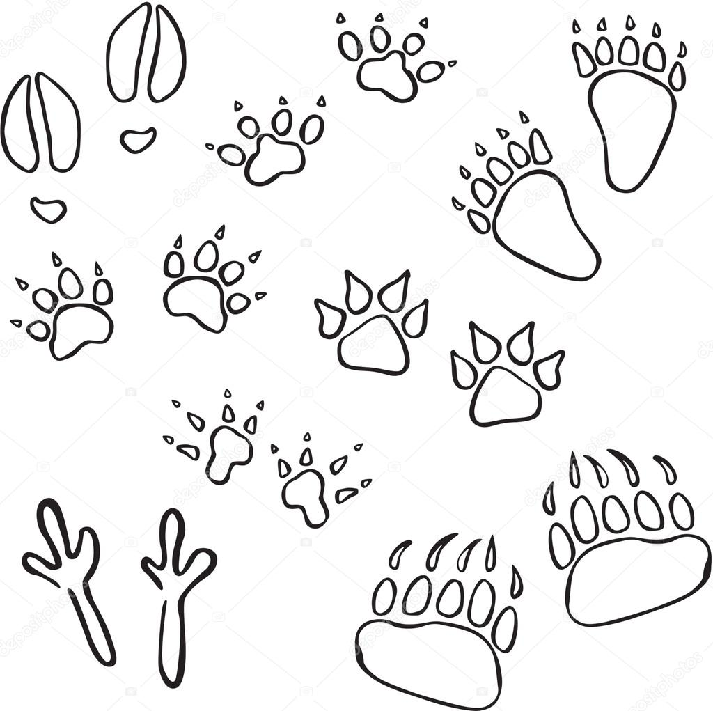 1024x1021 Vector Silhouettes Of Various Animal Tracks Stock Vector