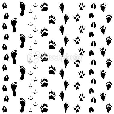 380x380 Animal Tracks Tattoo Ideas