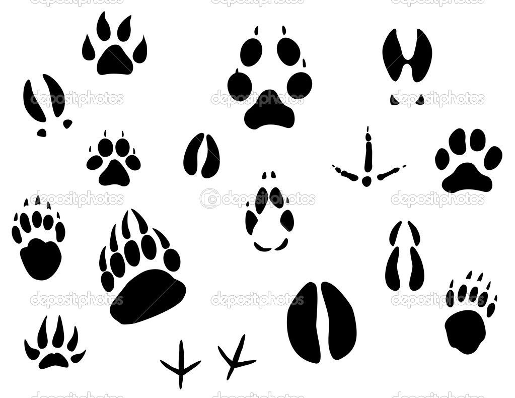 1023x790 Free Bear Sillouette Pages Animal Footprints Stock Vector