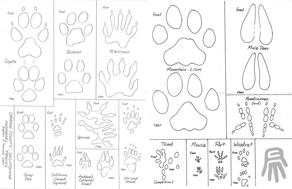 1024x663 Animal Track Guide By Robertmeyer