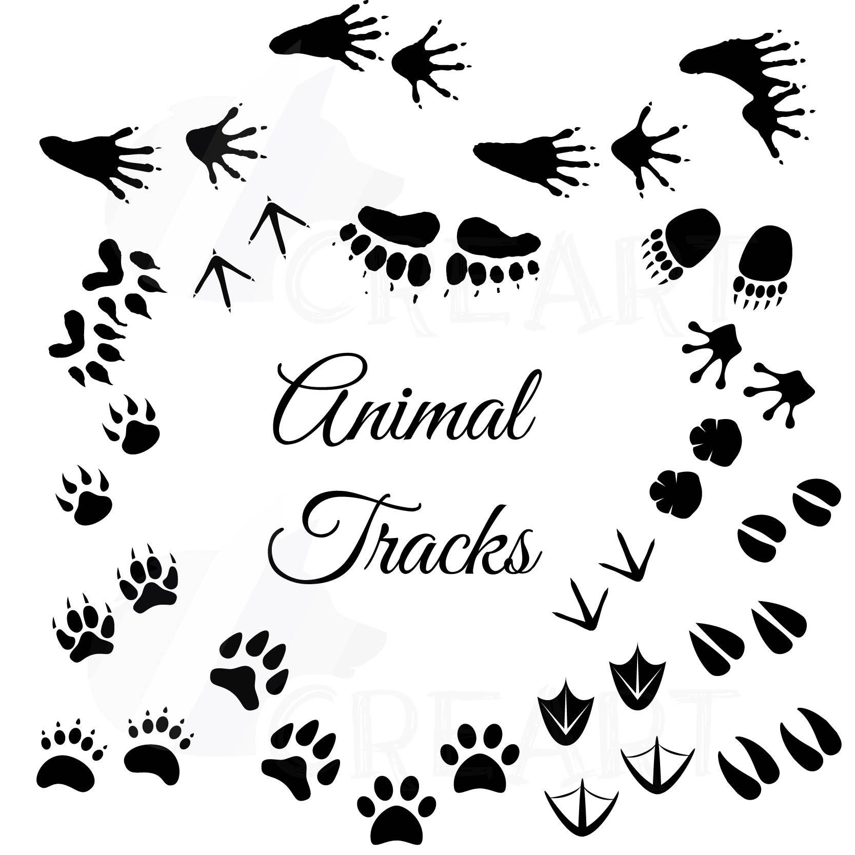 1667x1667 Animal Tracks, Woodland Animals Footprints Clipart Pack, Instant