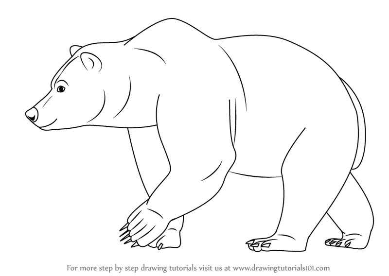 800x568 Learn How To Draw A Brown Bear (Wild Animals) Step By Step