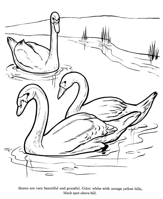 670x820 free coloring pages of animals ducks in a row - Drawing Pictures For Colouring