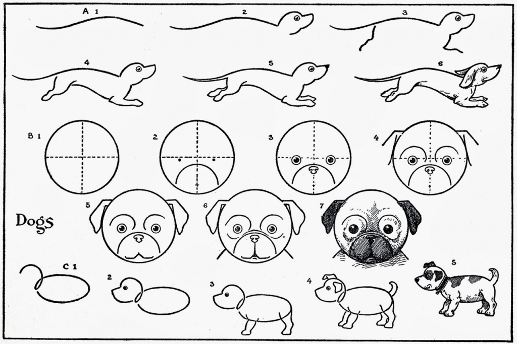 1024x683 Step By Step Animal Drawings Artist In La La Land Illustration Amp
