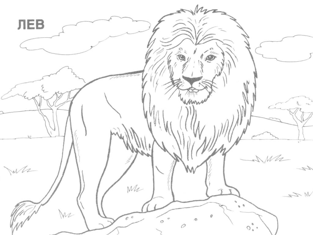 1024x768 Wild Animals Drawing Easy Coloring Pages Of Wild Animals