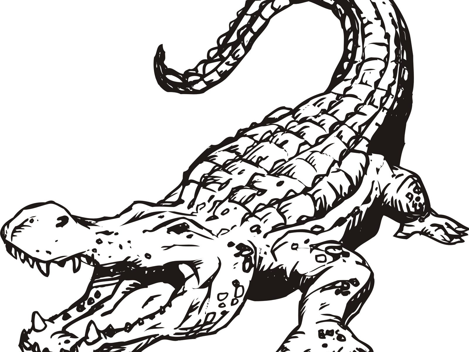 1600x1200 Orinoco Crocodile Coloring Page Free Printable Download Animals