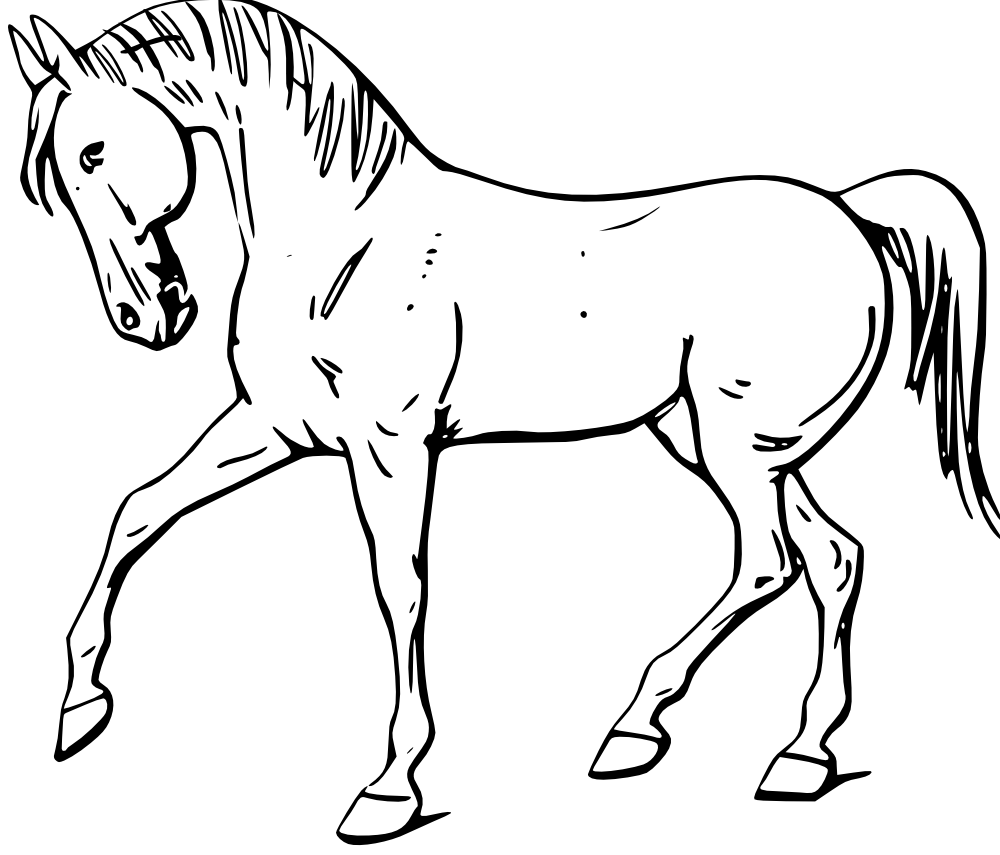 1000x855 Outline Drawing Of Domestic Animals