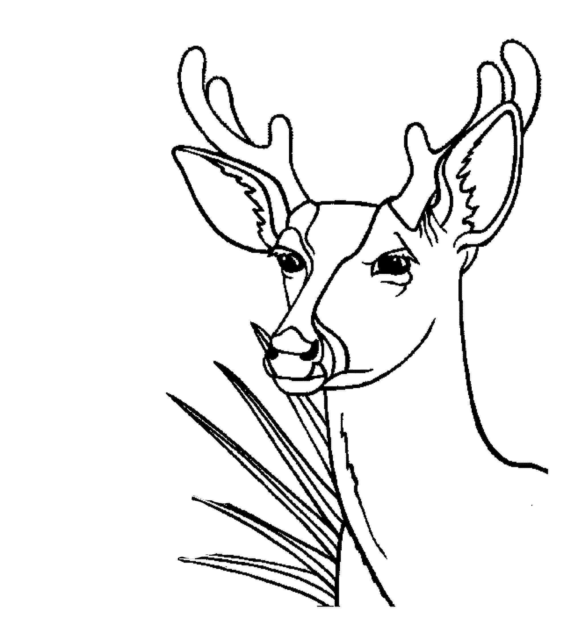 2000x2169 Deer