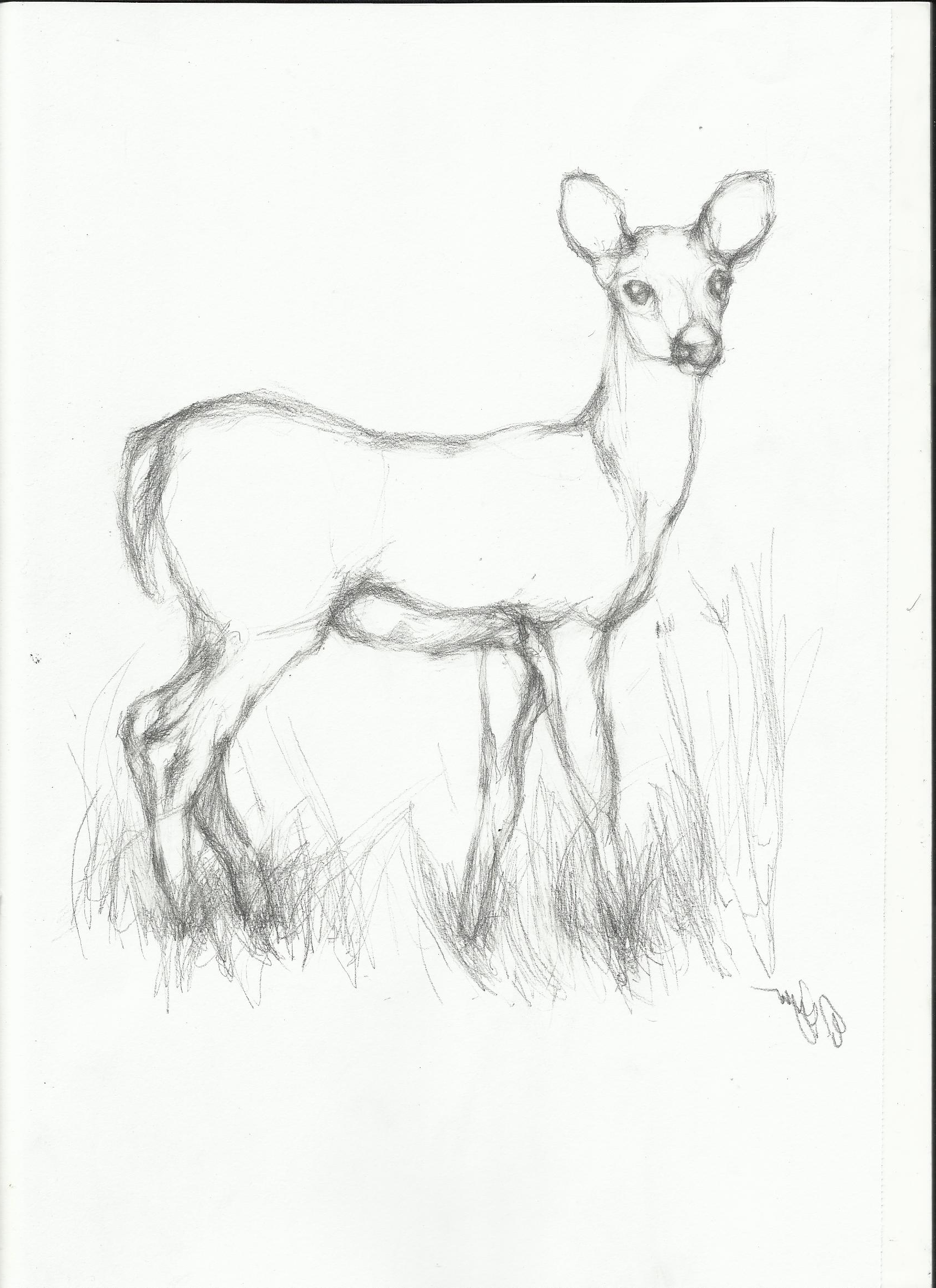 1700x2338 Drawing Of Wild Animals Step By Step