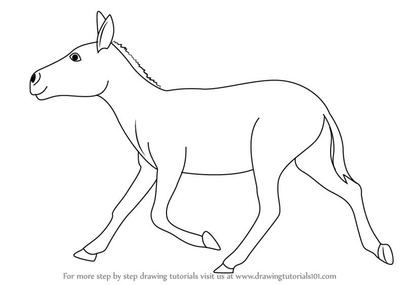 800x563 Learn How To Draw A Indian Wild Ass (Wild Animals) Step By Step