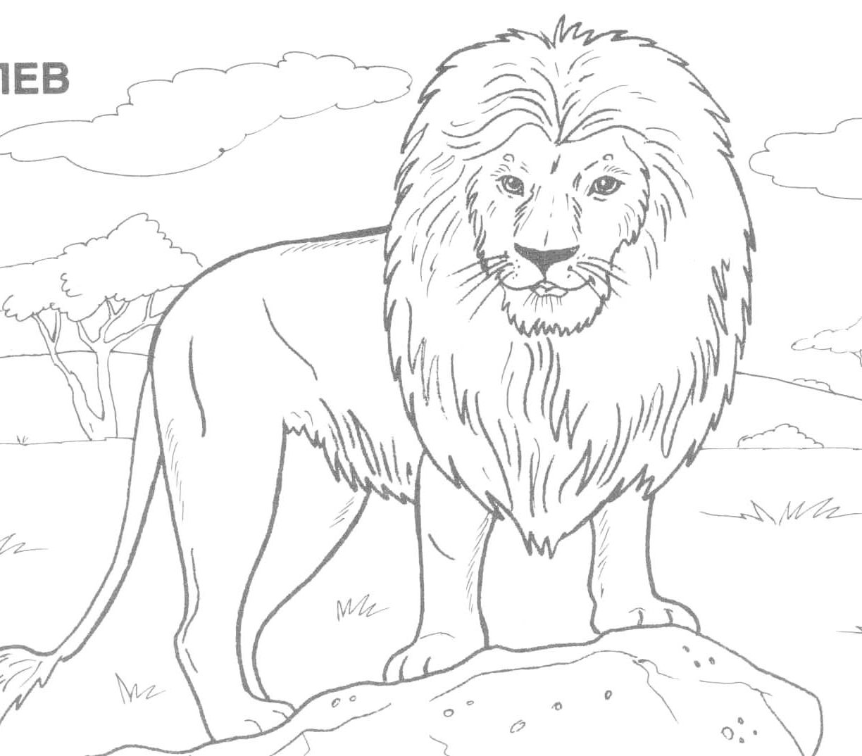 Animals For Drawing at GetDrawings.com | Free for personal use ...