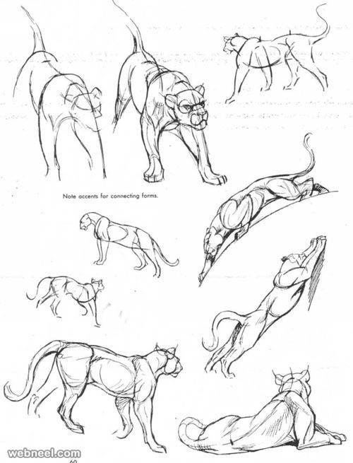 500x655 Pictures Drawing Photos In Animal,
