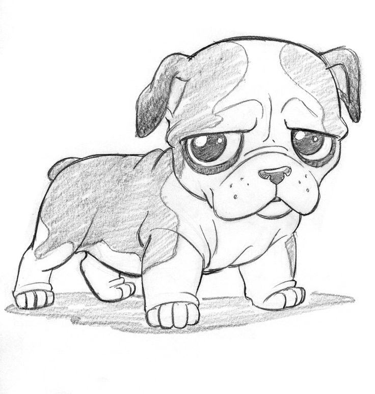 Animal drawings cute anime 1 736x775 drawn bulldog baby