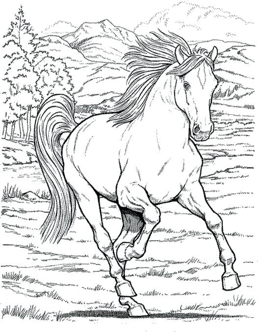 526x676 Coloring Pages Animals Realistic Realistic Coloring Pages